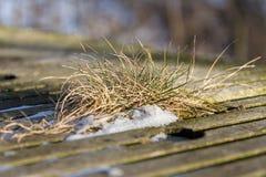 Tufts of grass between wooden slats. In winter Stock Photo