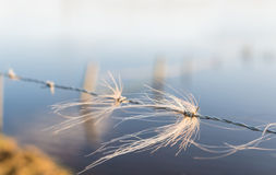 Tufts of horsehair intertwined with the barbed wire Stock Photography