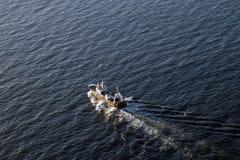 Tug Boat que navega Cape Town foto de stock royalty free