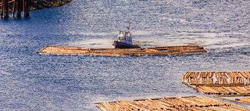 Tug Pushing Log Raft Photos libres de droits