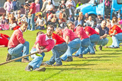 Tug of war at Nairn. Tug of war by a team at Nairn Highland Games held on 17th August 2013 Royalty Free Stock Image
