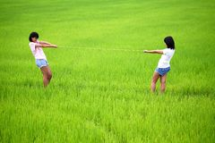 Tug of war between two young women in paddy field Royalty Free Stock Image
