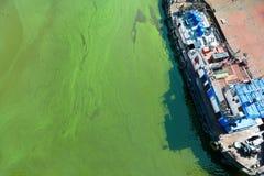 Tugboat στο νερό με τα πράσινα άλγη Στοκ εικόνα με δικαίωμα ελεύθερης χρήσης