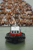 Tugboat and Log Boom stock photos