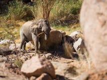 Tugga elefanten fotografering för bildbyråer