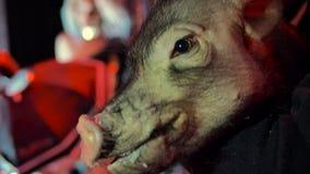 Tugga svinet tysta ned och att se kameran, i en nattklubb, exponerad av ljus arkivfilmer