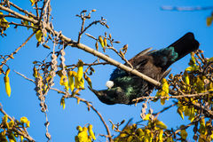 Tui Upside Down Stock Photography