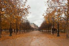 Tuileries的公园 免版税库存照片