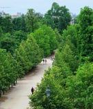 Tuileries trädgård i Paris, Frankrike Fotografering för Bildbyråer