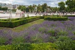 Tuileries trädgård Paris Frankrike royaltyfri fotografi