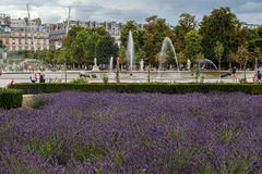Tuileries trädgård Paris Frankrike royaltyfri foto