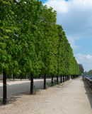 Tuileries Trees, Portrait Royalty Free Stock Image