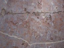 Tuiles de marbre de Brown superficielles par les agents Image libre de droits