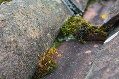 Tuiles de toit de terre cuite en bas soleil Photographie stock libre de droits