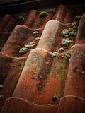 Tuiles de toit un jour givré Photographie stock
