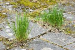 Tuiles et herbe de jardin Image libre de droits