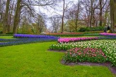 Tuilps和其他花在Keukenhof停放,利瑟,荷兰,荷兰 免版税库存图片