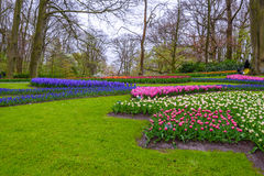 Tuilps and other flowers in Keukenhof park, Lisse, Holland, Netherlands. Royalty Free Stock Images