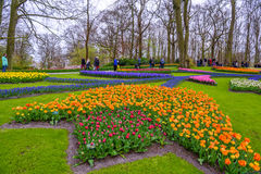 Tuilps and other flowers in Keukenhof park, Lisse, Holland, Netherlands. Royalty Free Stock Photo
