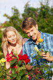 Tuin â die het tuinieren het werk met rozen doet Stock Foto