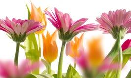 Tuin 3 van de lente Stock Afbeelding