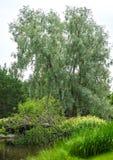 Tuin in arboretum, Tampere, Finland royalty-vrije stock foto's