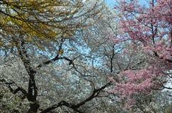 Tuin bij de Botanische Tuinen van Brooklyn op een zonnige de Lentedag, New York Royalty-vrije Stock Afbeelding