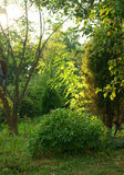 Tuin bij zonsondergang Stock Foto's
