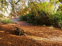 Tuin in de herfst Stock Foto's