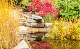 Tuin De herfst kleur Water installaties stock afbeelding