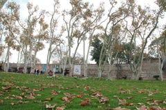 Tuin in de herfst in Topkapi-paleis, Istanboel, Turkije Stock Foto