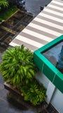 Tuin in de hoek van een gebouw Stock Afbeelding