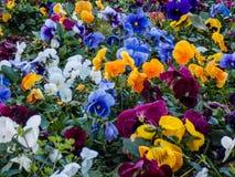 Tuin in de kolonie Uruguay van Sacramento royalty-vrije stock foto