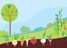 Tuin in de lente met groenten Stock Afbeelding