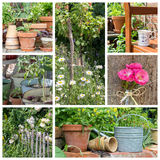 Tuin in de zomer Royalty-vrije Stock Fotografie