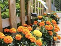 Tuin in de zomer Royalty-vrije Stock Afbeelding