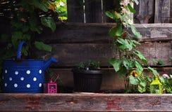 Tuin Decoratieve Voorwerpen Stock Fotografie