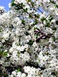 Tuin door de lente Stock Foto