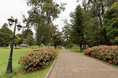 Tuin en aard in Nuwara Eliya Sri Lanka Royalty-vrije Stock Foto's