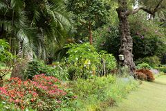 Tuin en aard in Nuwara Eliya Sri Lanka Stock Fotografie