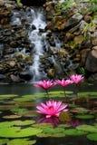 Tuin en waterval Stock Foto's