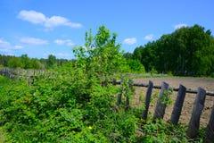 Tuin in het hout stock fotografie