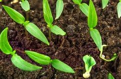 Tuin het planten Stock Foto's