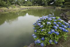 Tuin in Japan Stock Fotografie