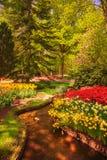 Tuin in Keukenhof, tulpenbloemen en bomen nederland stock afbeelding