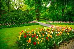 Tuin in Keukenhof, tulpenbloemen. Nederland Stock Foto