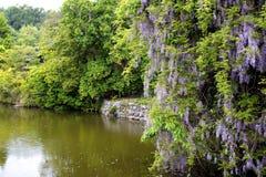Tuin in Kyoto Royalty-vrije Stock Fotografie