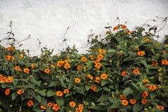 Tuin met bloemen Royalty-vrije Stock Fotografie