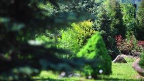 Tuin met boom in de lente stock footage