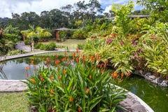 Tuin met diverse tropische installaties en bloem Stock Afbeeldingen